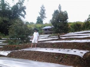 Berkebun durian Montong Kebumen