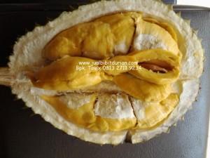 Manfaat Durian Bagi Tubuh
