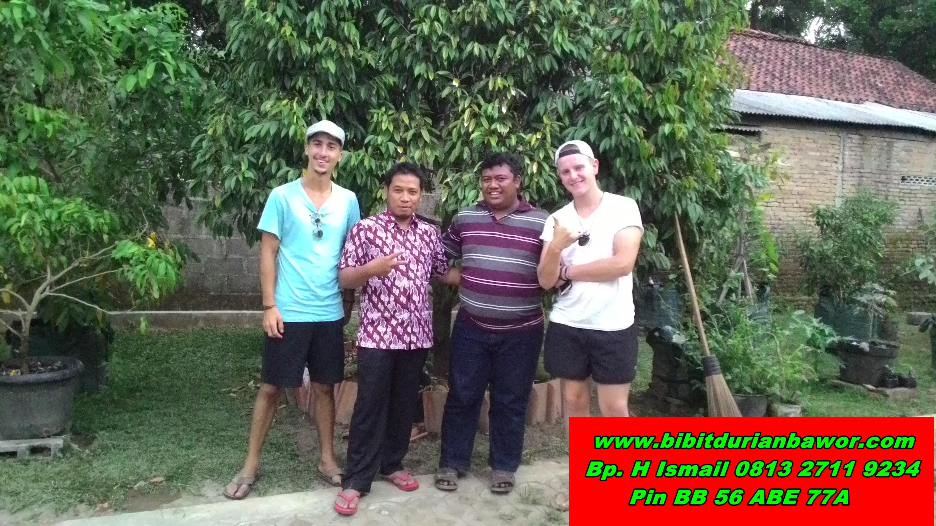 Bibit Durian H Tovix TERPERCAYA