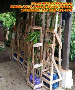 Bibit Durian Montong Banyumas