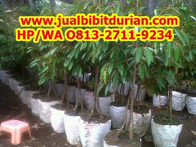 Harga Durian Bawor Serang