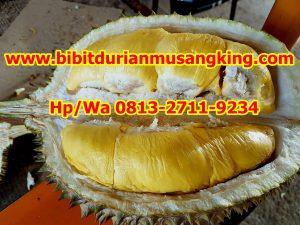 Jual Bibit Durian Musang King Jakarta