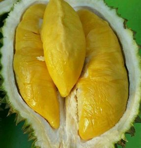 Jual Bibit Durian Unggul Surabaya