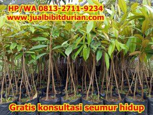 Jual Pohon Durian Bawor