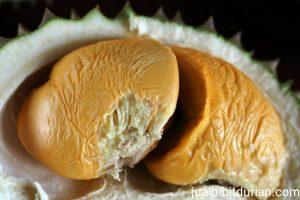 Jual Bibit Durian Genjah Medan