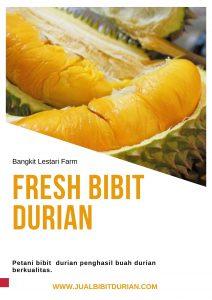 Durian Bangkit Lestari farm
